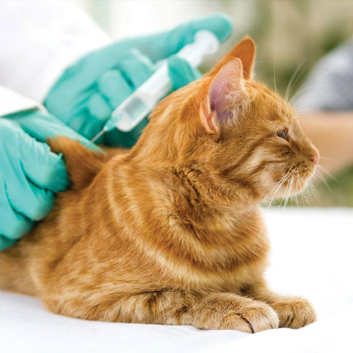 PET VACCINATIONS ANIMAL CARE