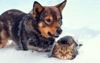 Dog and Cat in Winter
